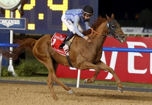 【bookmaker】2016 Dubai World Cup Night Who Will Capture