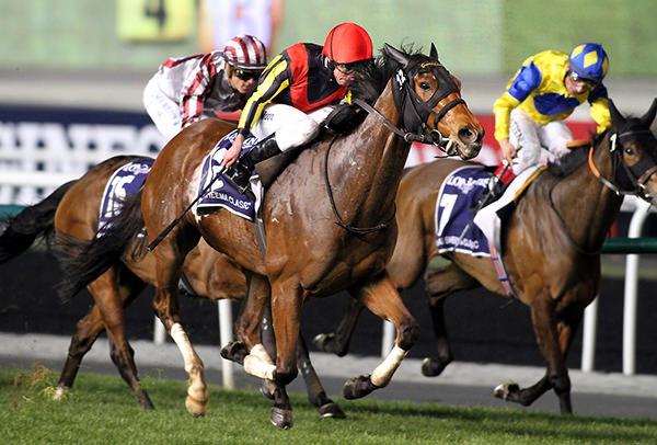 Gentildonna 2014 Dubai Sheema Classic